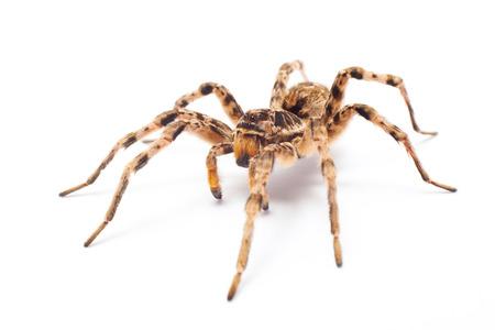 spin geïsoleerd op witte achtergrond Stockfoto