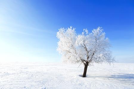 Alone Tree in the snow in a field in winter. Beautiful white winter. Blue sky.