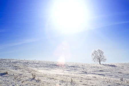 wintery day: Alone frozen tree on winter field and blue sky with rare clouds