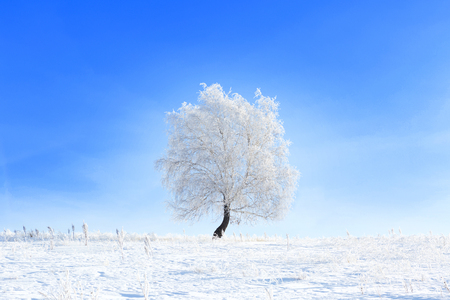 Tree in the snow in a field in winter. Beautiful white winter. Blue sky.