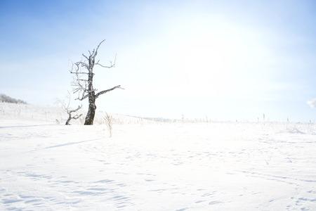 afield: Dead tree on snow-covered field in a winter season