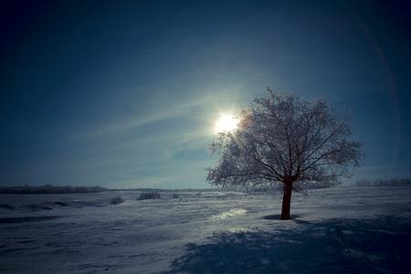 혼자 나무와 달 밤. 아름 다운 하얀 겨울입니다. 검은 하늘.