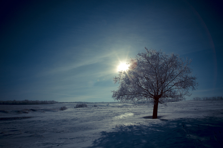 lonesome: alone tree and moon in night. Beautiful white winter. Black sky. Stock Photo