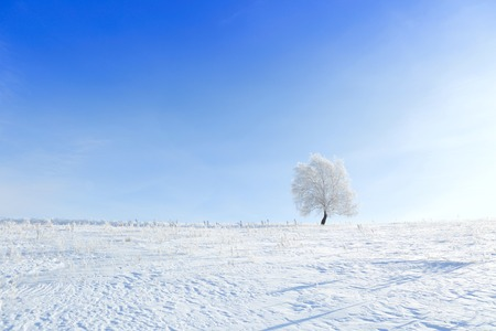 day dream: Alone frozen tree in winter snowy field. Frosty winter day - snowy branch.