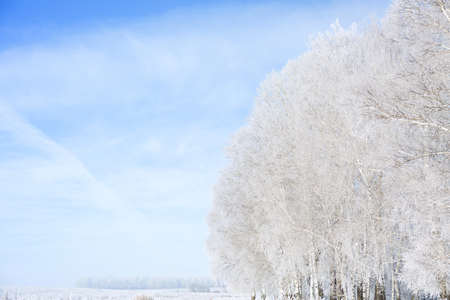 snowscene: Landscape photo of a field and trees covered in fresh snow  with a clear blue sky.