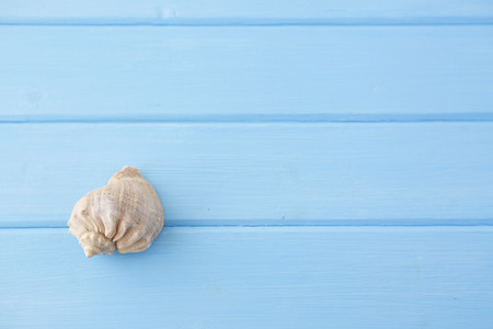 blue design: Big seashell lying on a blue wooden background Stock Photo