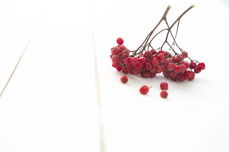 rowanberry: Rowanberry on the white wooden table background