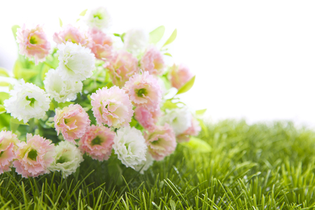 twiggy: Small white and pink roses on grass isolated on white