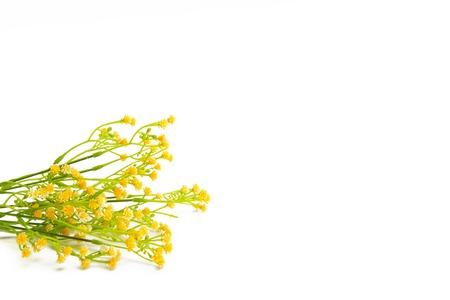 fleurs des champs: Fleurs jaunes isolé sur fond blanc. Wildflowers.