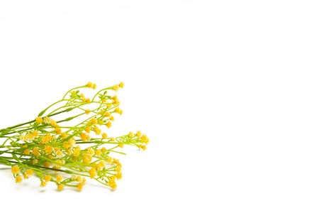 isolated on yellow: Yellow flowers isolated on white background. Wildflowers. Stock Photo