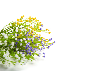wildflowers: Colorful flowers isolated on white background. Wildflowers.