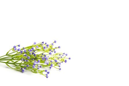 fleurs des champs: Lilas ou violettes fleurs de couleur isolé sur fond blanc. Wildflowers.