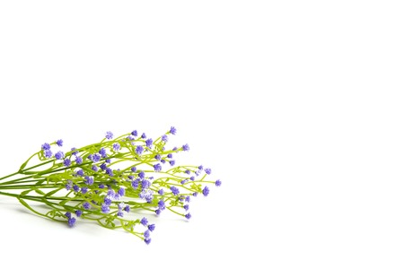 fiori di campo: Lilla o fiori viola colorate isolato su sfondo bianco. Fiori di campo. Archivio Fotografico
