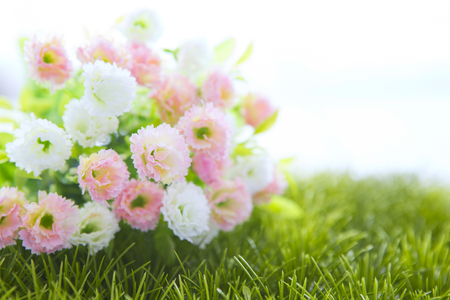 frail: Small white and pink roses on grass isolated on white