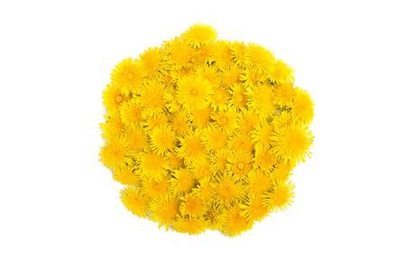 circle shape: Dandelion flowers isolated on white. Circle shape Stock Photo
