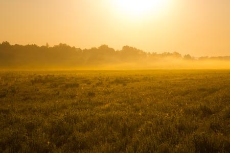 backlit: very nice nature background. backlit shot, clear sky. Sunrise or sunset.