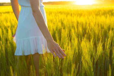 hands over ears: Woman hand touching wheat ear in wheat field, sunset light