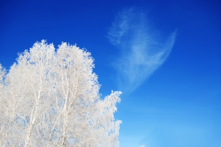snowscene: Landscape photo of a field and trees covered in fresh snow with a clear blue sky. Christmas background. Stock Photo