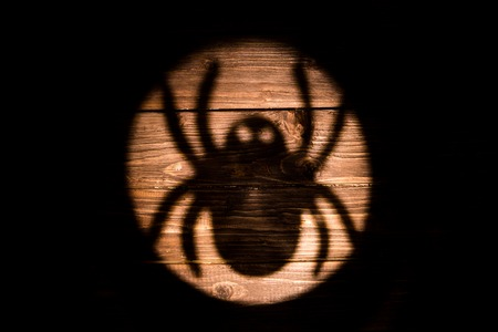 dread: Big spider shadow on the wooden background. Halloween. Stock Photo