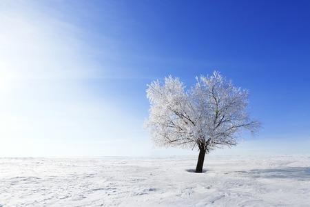 Frozen tree on winter field and blue sky. Winter.