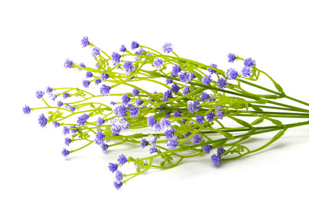 fiori di campo: Synthetic Lilac or violet colored flowers isolated on white background. Wildflowers. Archivio Fotografico