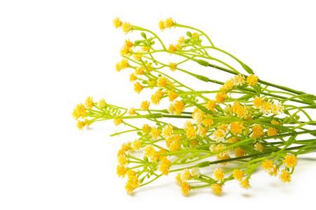 fiori di campo: Sintetici fiori gialli isolato su sfondo bianco. Fiori selvatici.