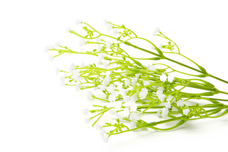 fleurs des champs: Artificial White wild flowers isolated on white background. Synthetic Wildflowers.