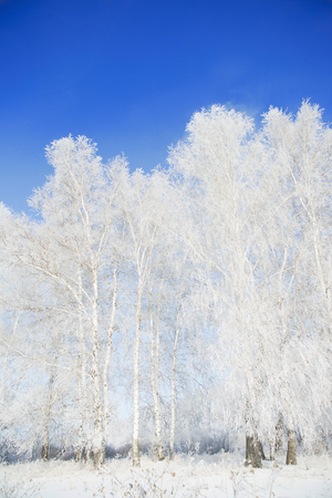 covered fields: Landscape photo of a field and trees covered in fresh snow with a clear blue sky. Christmas background. Stock Photo