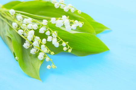 Spring white lilies of the valley on a blue wooden background.