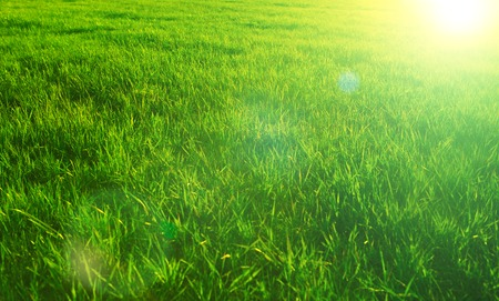Green grass close-up in sunset. Summer or spring meadow. Nature background.