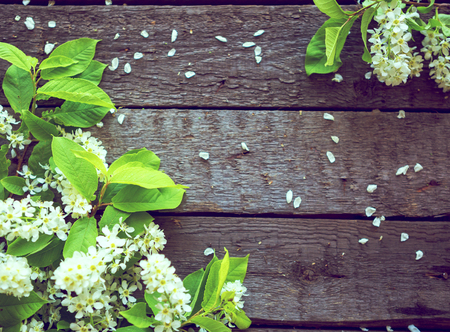 White flowers of a bird-cherry tree with green leaves against the wooden background.