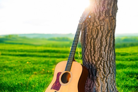 Wooden acoustic guitar for left-handed musician and the tree in summer or spring day. Music concept photo.