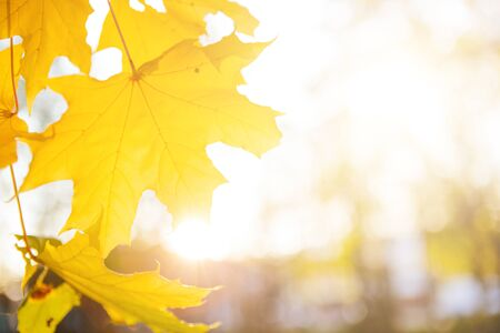 Beautiful autumn landscape with yellow trees and sun. Autumn season concept Beautiful autumn landscape with fallen yellow leaves and sun. Falling leaves natural background