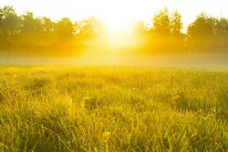very nice nature background. backlit shot, clear sky. Sunrise or sunset.