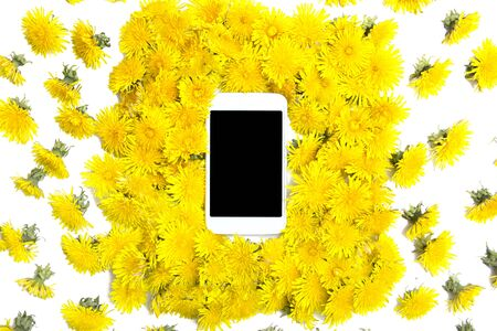 Mobil smart phone surrounded by yellow  dandelions flowers  on a white background