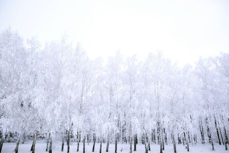 Frozen trees covered with snow in the winter park. Nature Reklamní fotografie