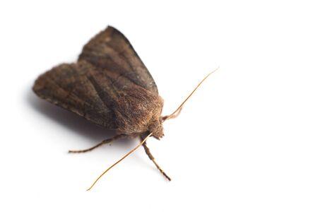 moth. night butterfly on white background Stock fotó