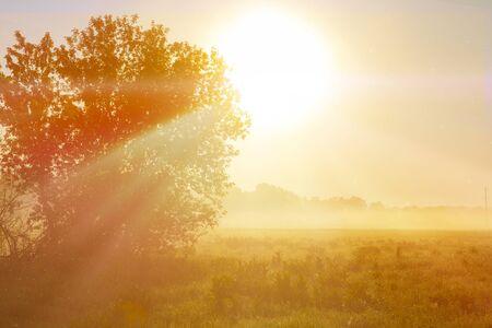 Unusual river fog in summer season. Sunrise or sunset. Zdjęcie Seryjne