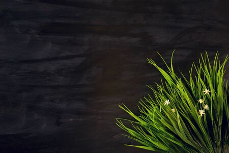 Close up of green grass leaves on black wooden or metal background