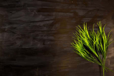 Close up of green grass leaves on a black wooden or metal background Stock Photo