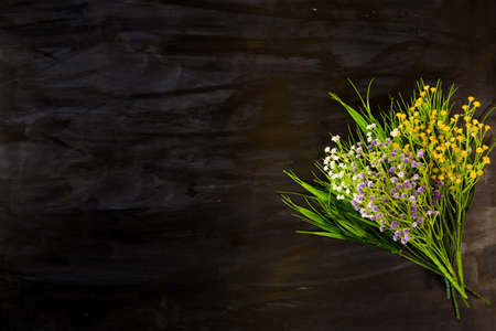 Wildflowers on a black wooden or metal background Stock Photo
