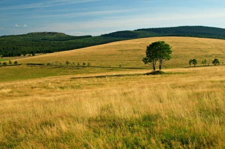 Mountain meadow, golden grass, a lone tree on the horizon coniferous forest and mountain Stock Photo - 17999534