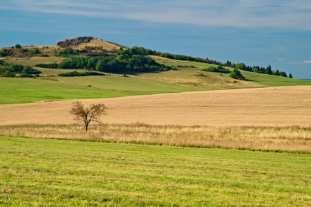 afield: Mountain of cereal field, lonely tree in the foreground