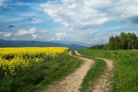 Dirt road among rapeseed field and meadows with woods, forested mountains in the background