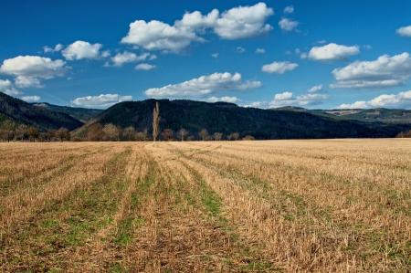 perspectiva lineal: Rastrojo de ma�z de primavera campo temprano, Hilera de �rboles sin hojas, monta�a boscosa en el fondo en las sombras, l�neas crean la perspectiva lineal hacia el �rbol dominante