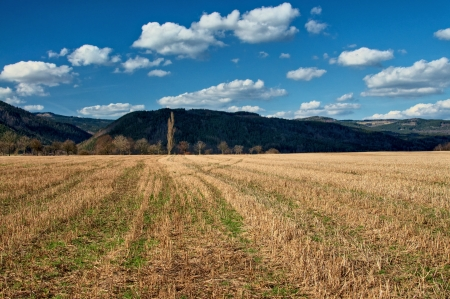Stubble corn field early spring, row of leafless trees, forested mountain in the background in the shadows, lines create linear perspective towards the dominant tree Stock Photo - 18306757