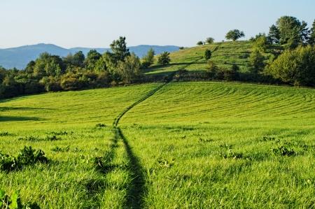 背景の山々 で、丘の上まで牧草地を通って成長する草の轍します。 写真素材