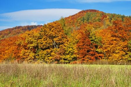 Forest with leaves in autumn colors, in the foreground meadow, forested mountain in the background                                photo