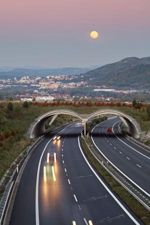 풍경에 ecoduct와 아스팔트 고속도로 이상 황혼. 거리에서 도시 위에 장미 빛 하늘에 떠오르는 보름달. 가벼운 경로 헤드 라이트 고속도로에서 여행하는