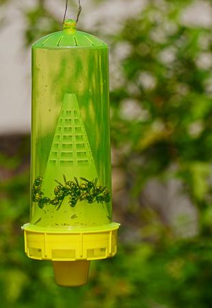 Wasp Trap